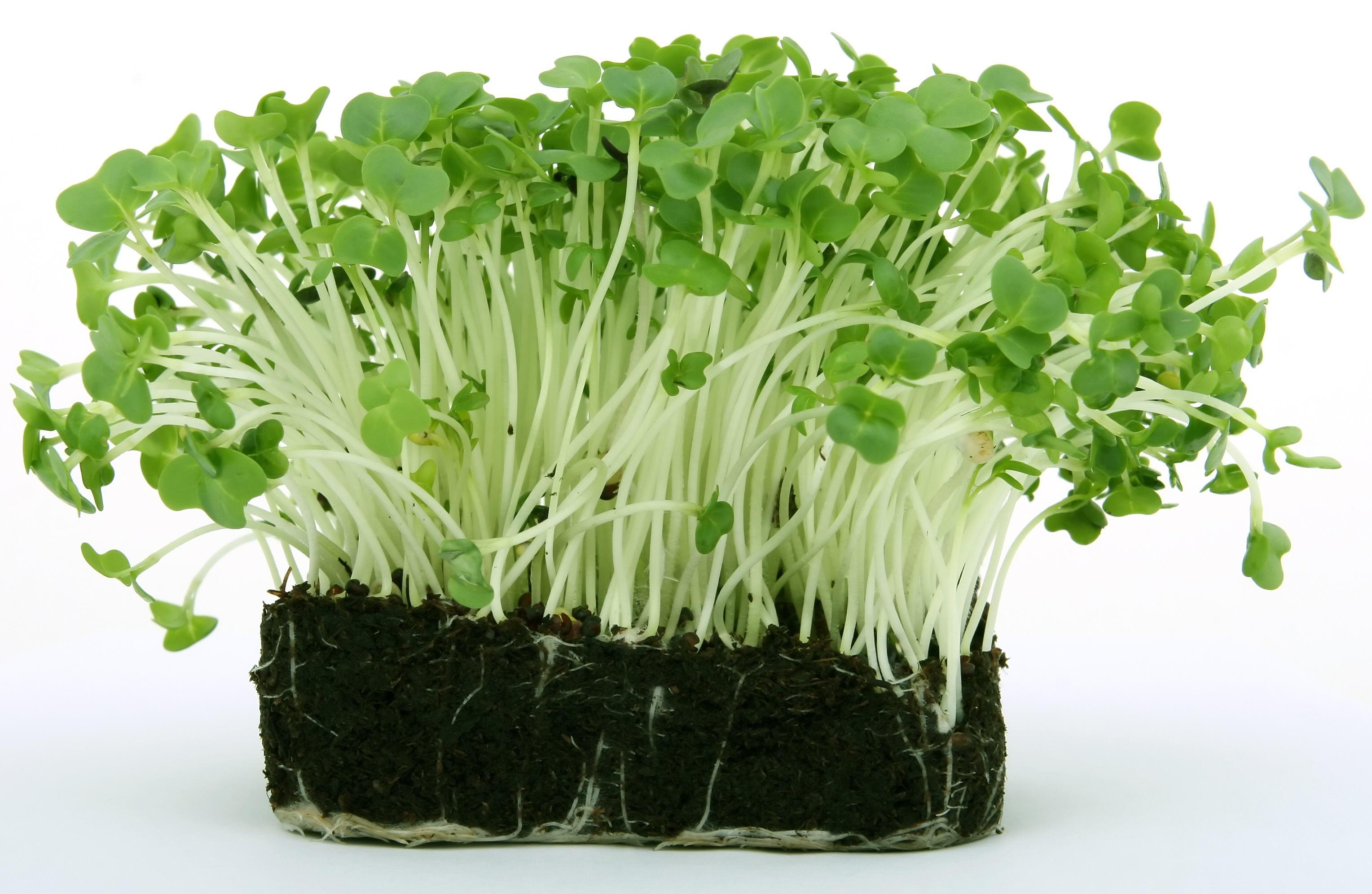 Vegetables-46