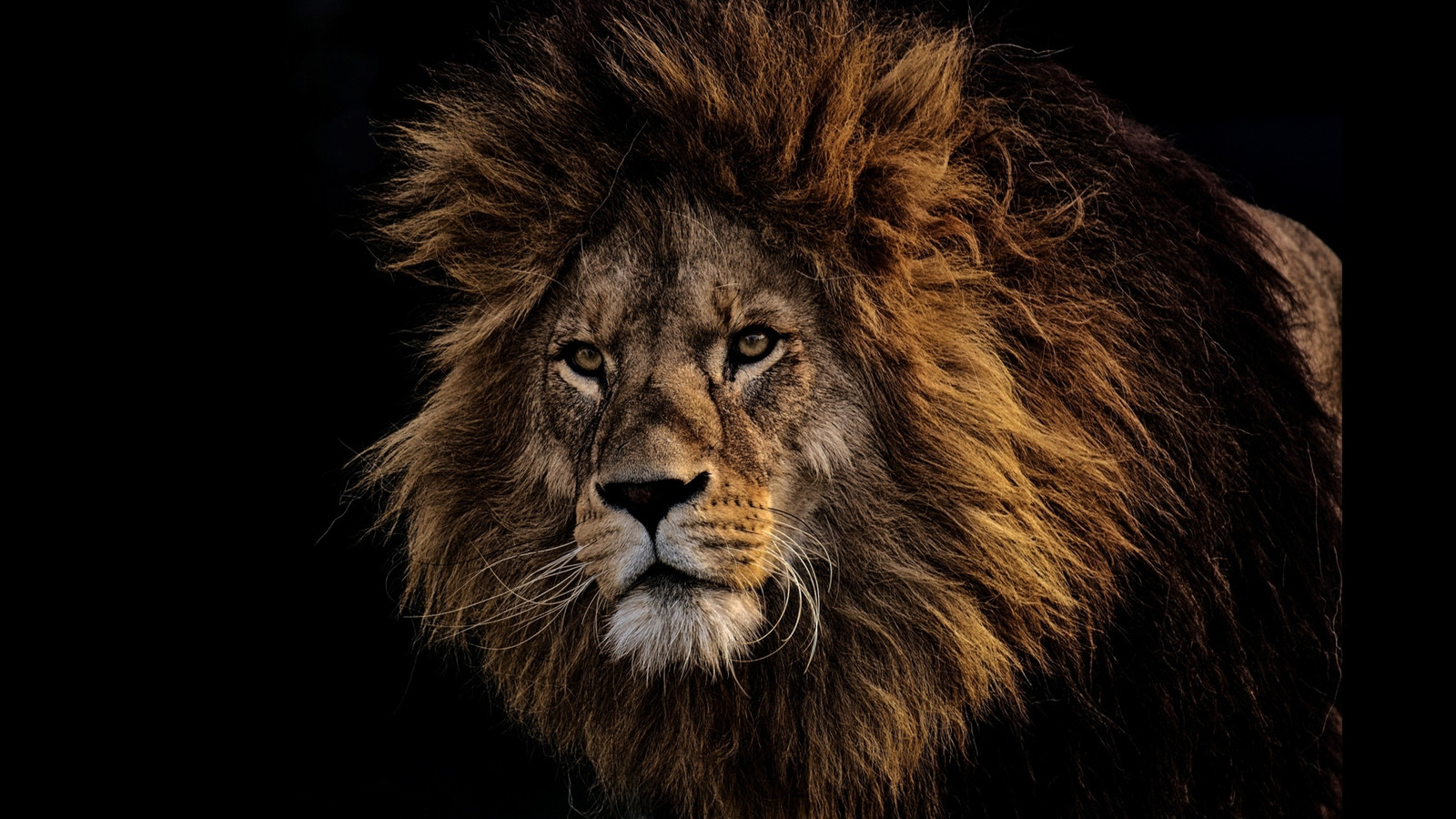 LionPAQ-02.JPG
