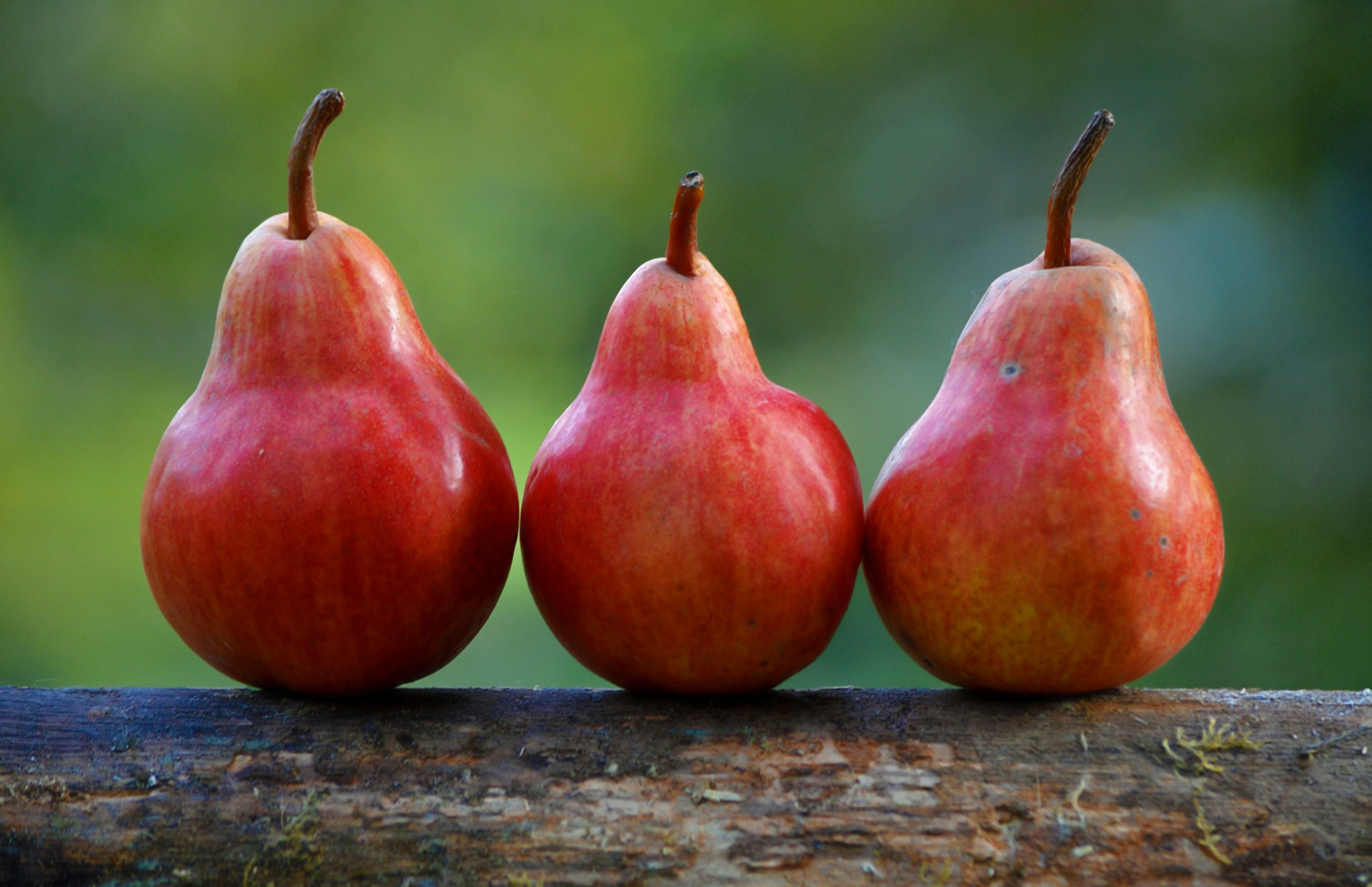 Fruit-46