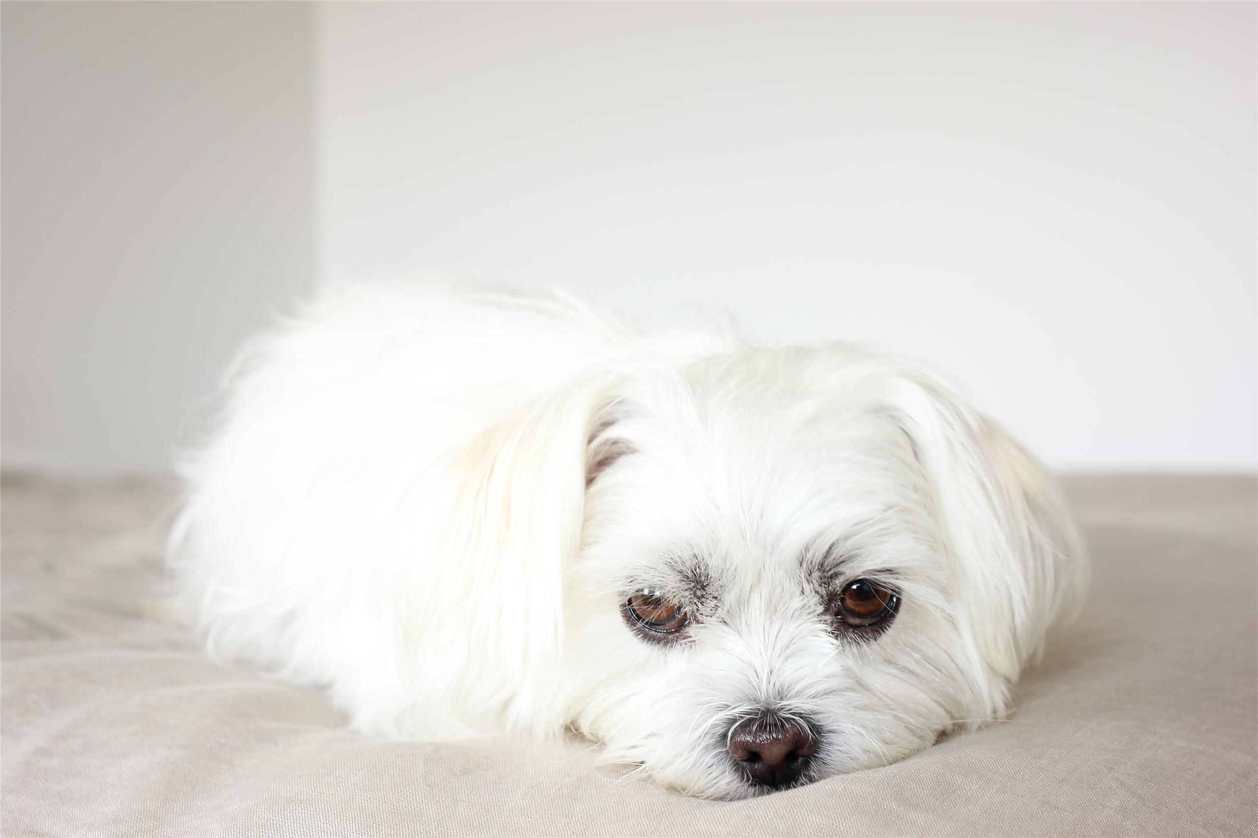 puppy-1547176