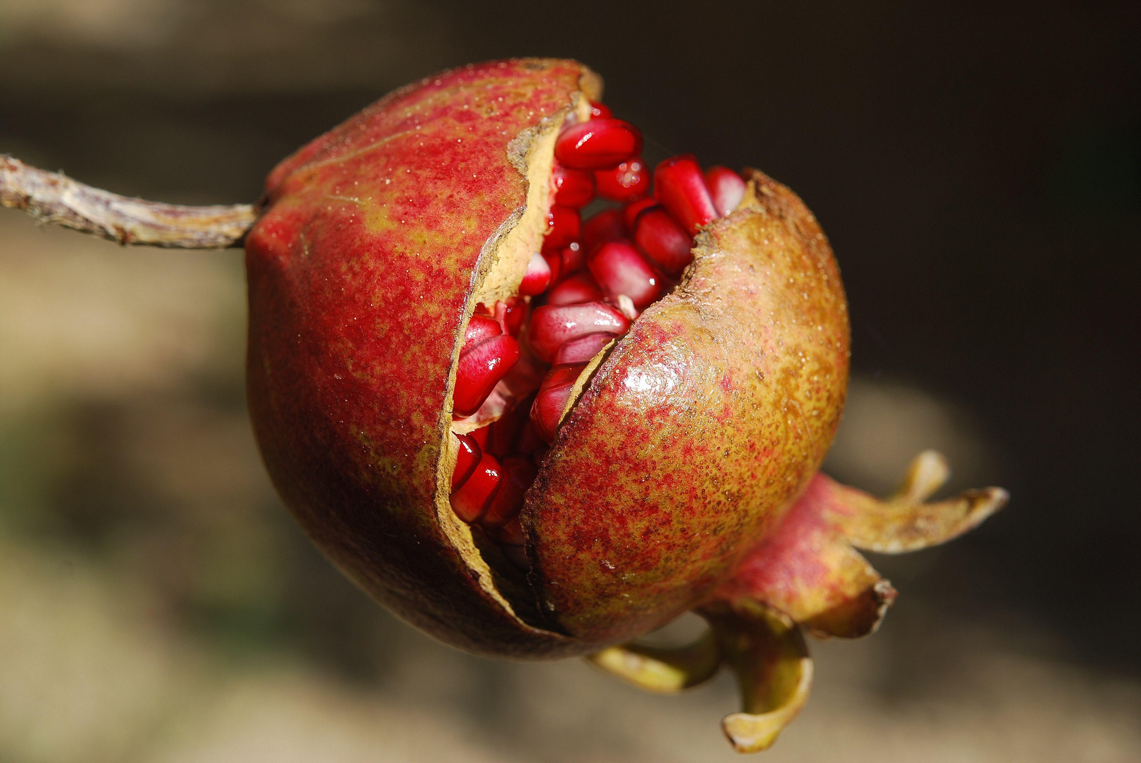 Fruit-49