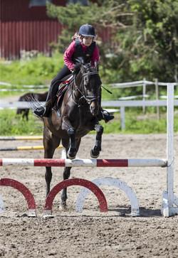 horse jump training