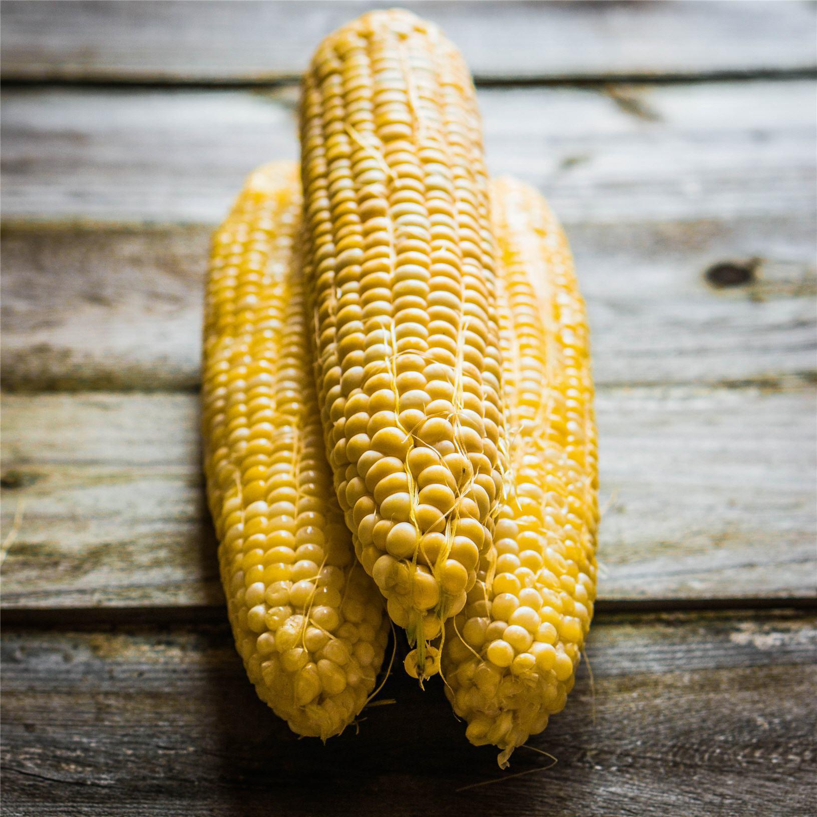 corn, corn on the cob
