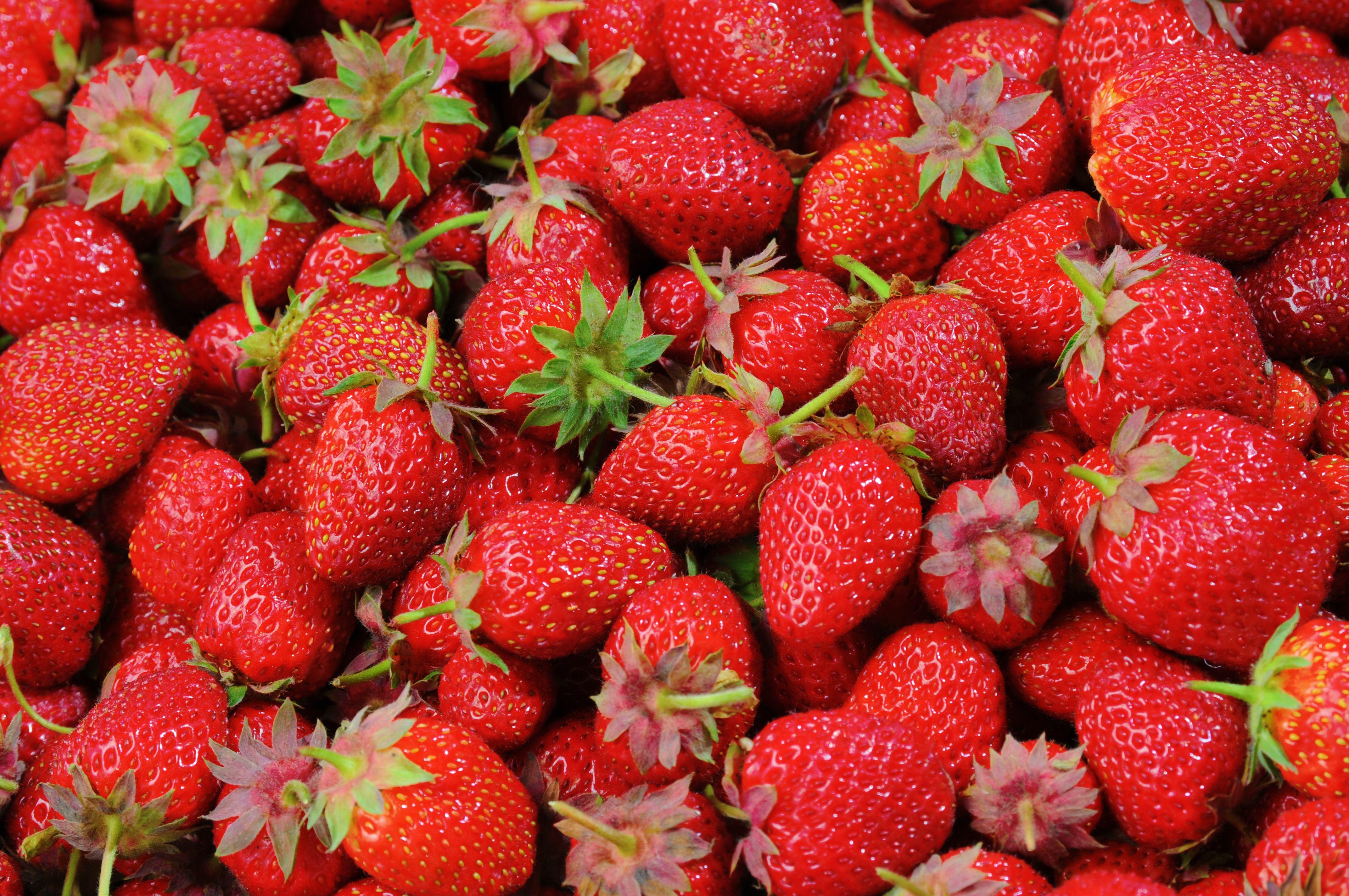 Fruit-56