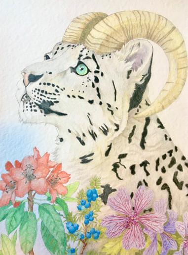 Predator to Prey: Snow Leopard