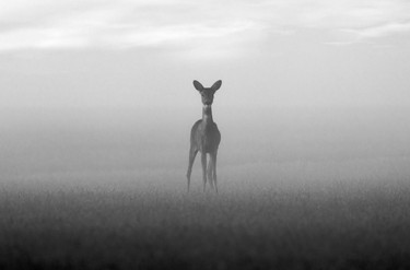 Ree Mist 1.jpg