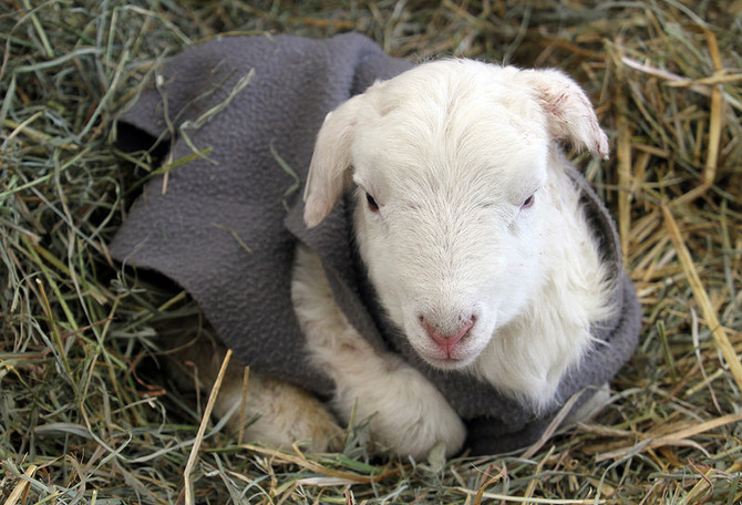 Keeping Newborns Warm
