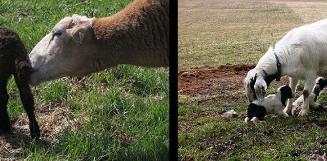 So. MD Lambing & Kidding Workshop