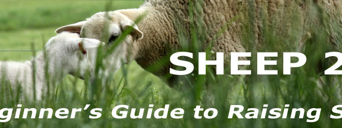 Sheep 201:  New Chapters