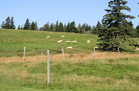 generalhealthcare   Maryland Small Ruminant Page