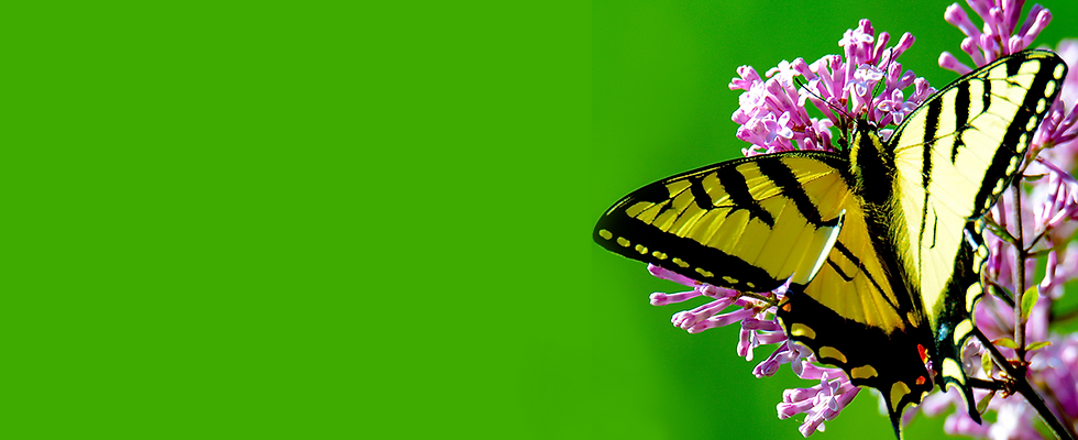 butterfly-back.png