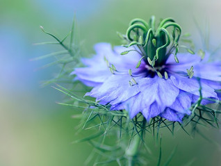 花の波動をダイレクトに受け取る方法