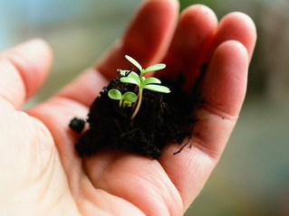 生態系の調和のためにできること