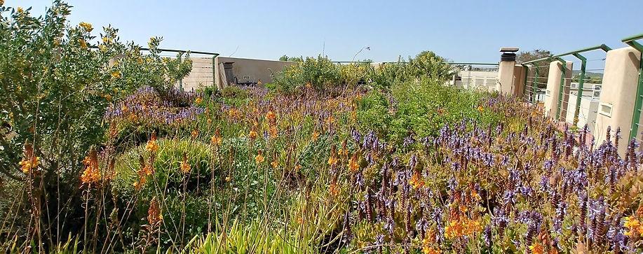 BLDVEG Building Vegetation