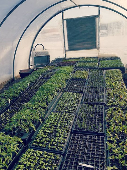 The seedling greenhouse is filling up 🌱