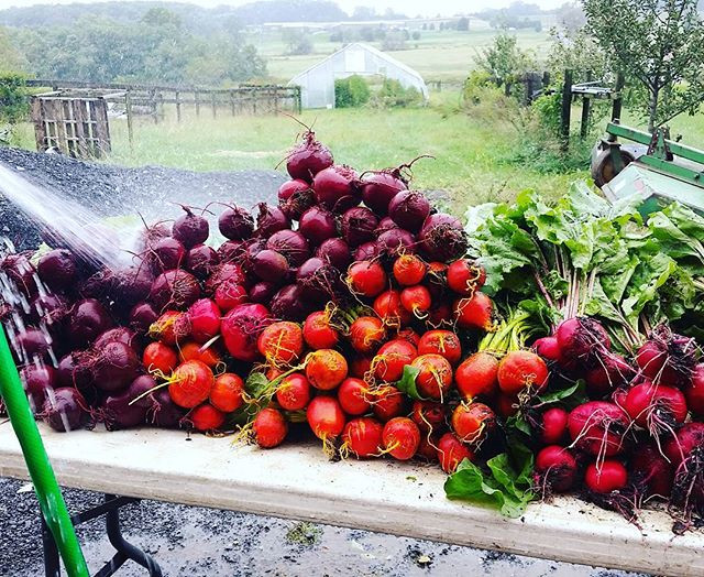 #brightandbeautiful #bunchesofbeets on t