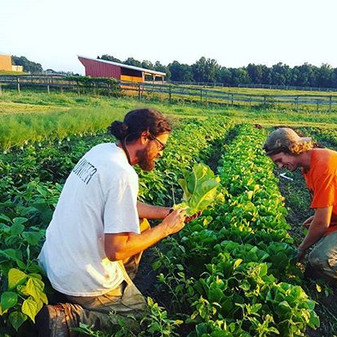 we picked some #romaine beauties for you