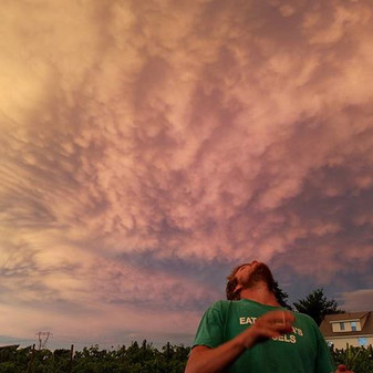 That #gloaming #mint harvest #poststorm