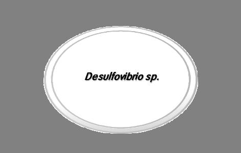JBD-P-020