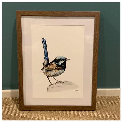 A4 Framed Art - Blue Wren