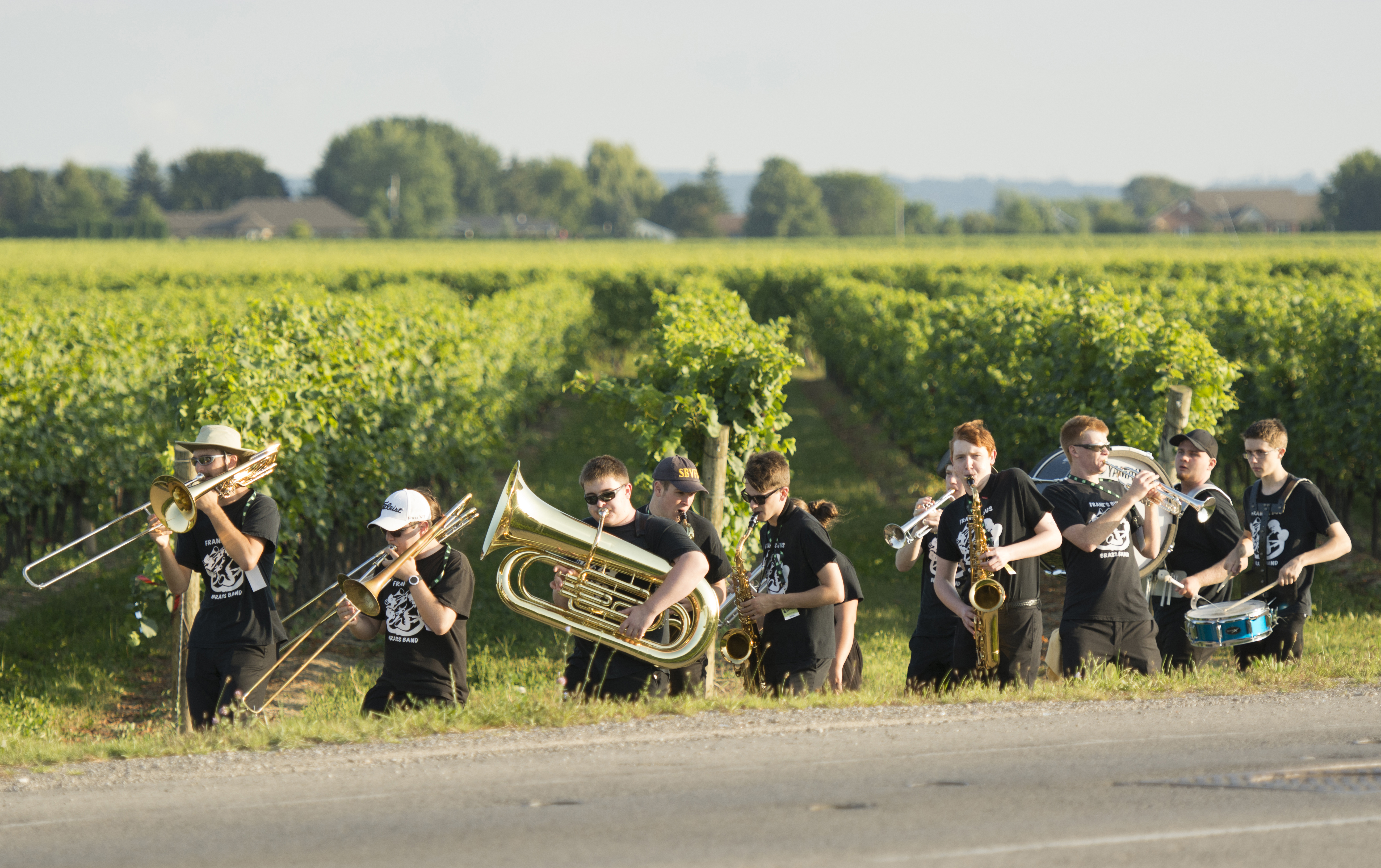 Brass in the Vines