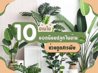 10 ต้นไม้ยอดนิยมปลูกในบ้าน ช่วยดูดสารพิษ