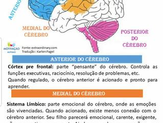 Regulação Emocional e o cérebro