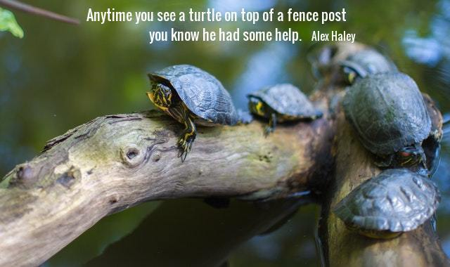 Blue turtles on a limb