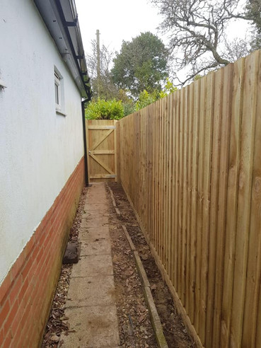 feather edge fencing with pedestrian gate