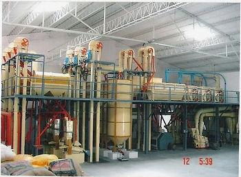 chana-besan-plant-500x500.jpg