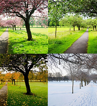 the-four-seasons.jpg
