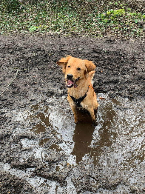Cleo being super cheeky and super muddy!