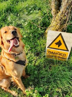 DANGER! Guard dog....
