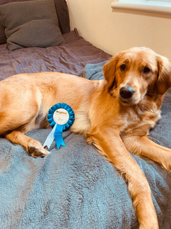 Cleo's 2nd Place Rosette from Dogs Fest