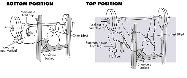 Charming The Bench Press Exercise Is A Solid Compound Lift Which Has A Place In  Nearly All Gym Routine Programming. It Is Excellent In Developing Strength  And ...