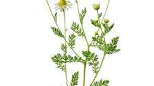 Eau florale de Camomille Romaine 250 ml