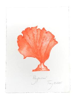 Polyparies