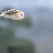 Owl-3.jpg