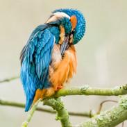 kingfisher-1.jpg