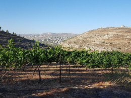 Grapes from Zion: Biblical prophesy and quality wine in the West Bank