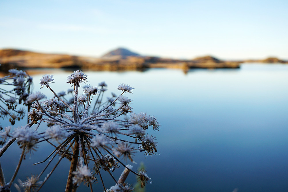 Snow capped plant with the beautiful lake.