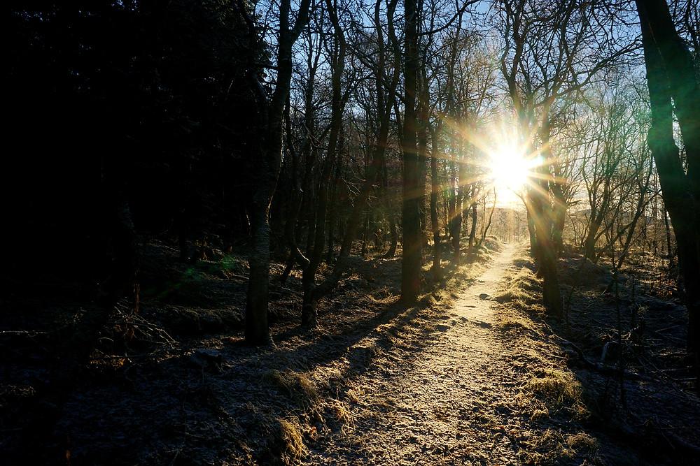 Sunlight ray make the snow ground become yellowish.