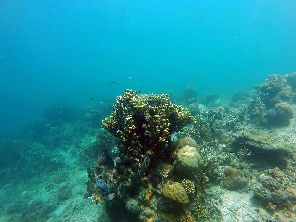A big coral reef.