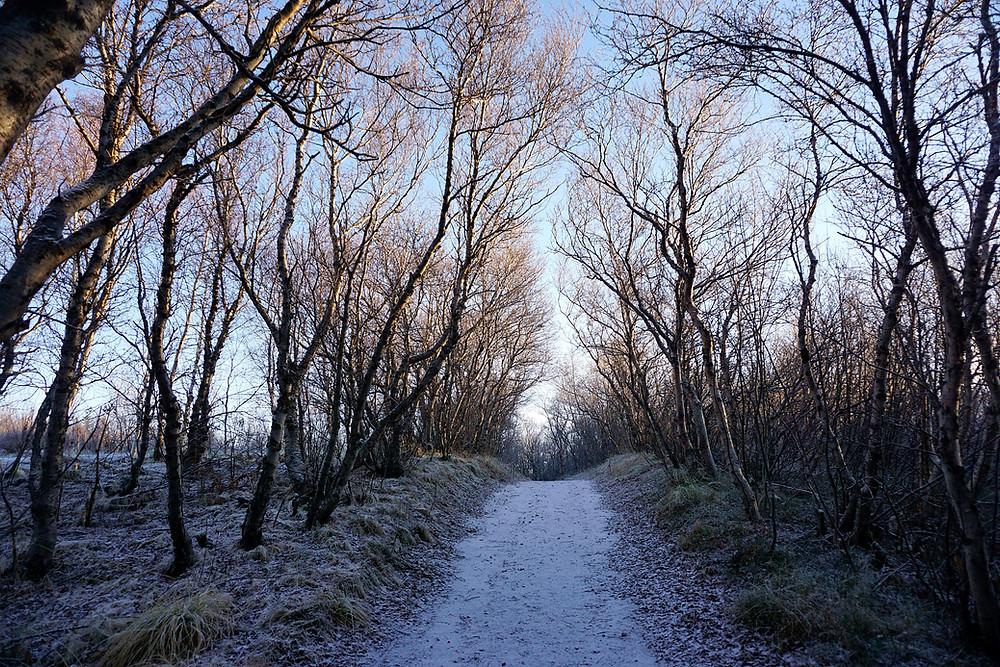 The long straight walk path.