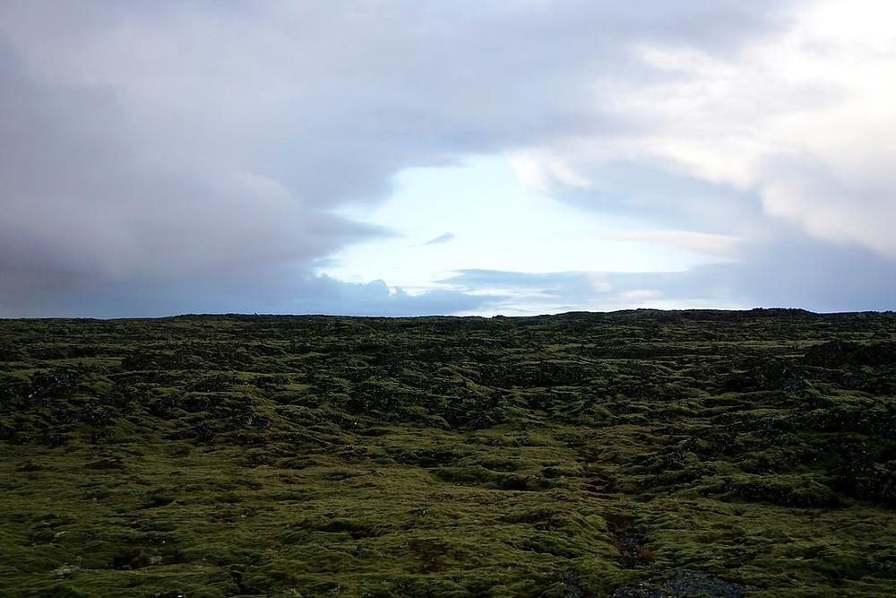 Green mossy field!