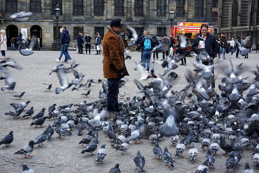 Group of pigeons came closely when this guy is feeding them.