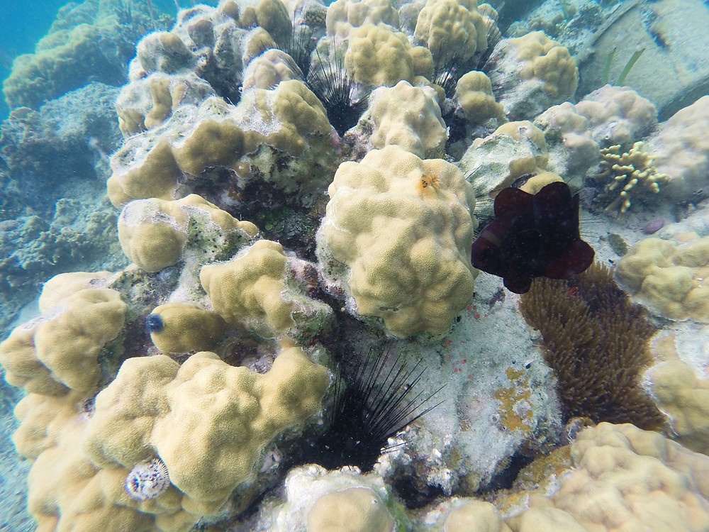 Whenever you are near to the coral, then it is coming from no where.
