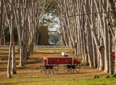 The Singha Park