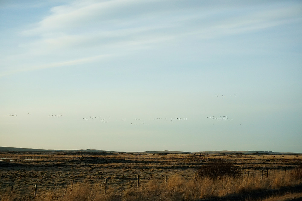 Group of birds flying over the sky.