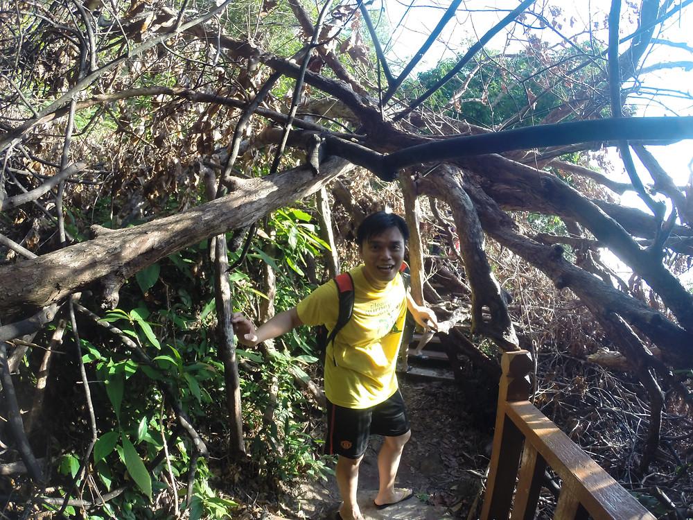 倒下的大树。